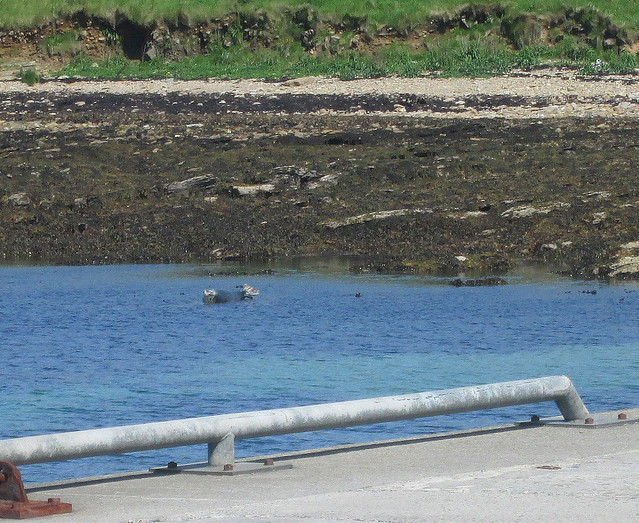 A Seal, Flotta