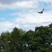 International Birds of Prey Centre (84)