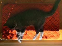 Cat equinox