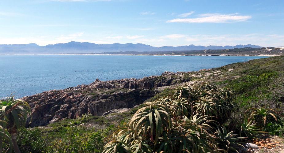 Walvis spotten in Zuid-Afrika: De Kelders | Mooistestedentrips.nl