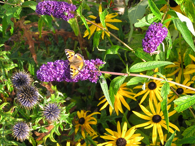 Bee&Butterfly Bed