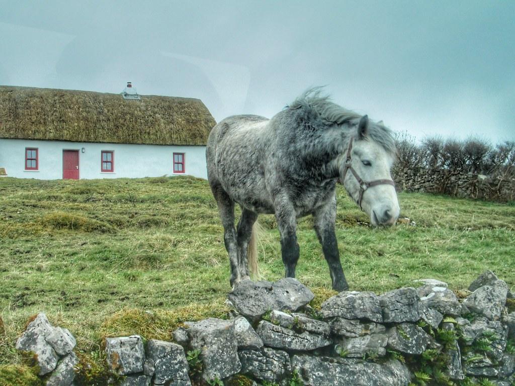 Aran Islands Inis Mor Horse Cottage