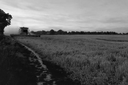 Evening harvesting