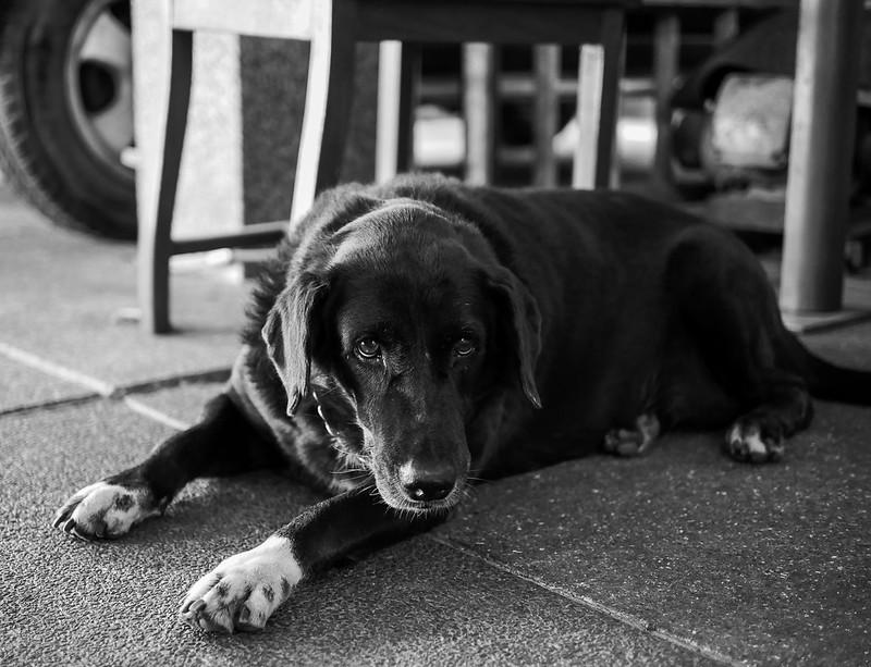 my_dog_02