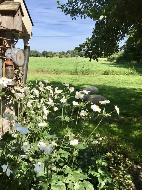 Uitzicht weilanden boerderijtuin