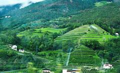 Brenner Pass 66