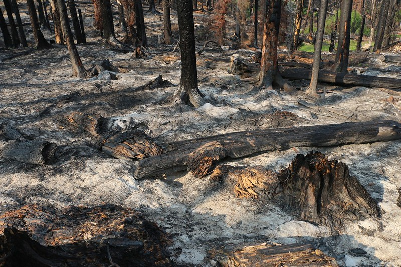 This section of forest burned all the way into the ground, leaving a thick layer of powdery ash