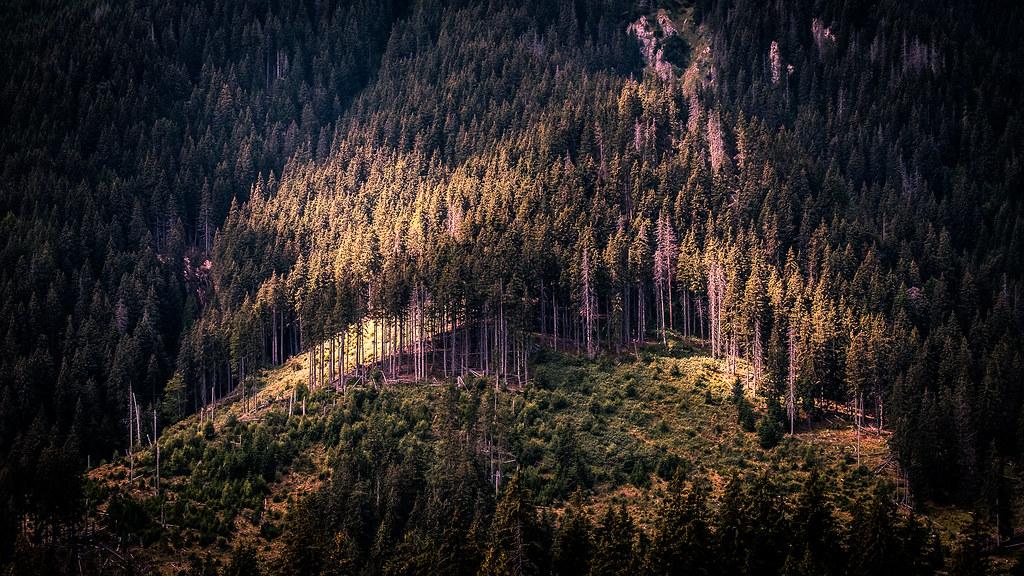 Southern Carpathians, Piatra Craiului - Romania - Landscape photography