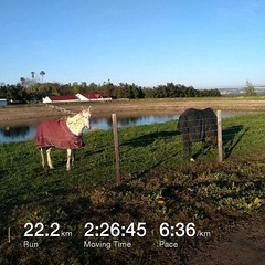 Beautiful morning for a #stravachallenge #halfmarathon #run through some of #trails on the beautiful #farm we have here in #somersetwest #stravaphoto #nature #fun #southafrica #tomtom #tomtomadventurer #fitness #strava #stravaphoto #stravarun #suacony #sa