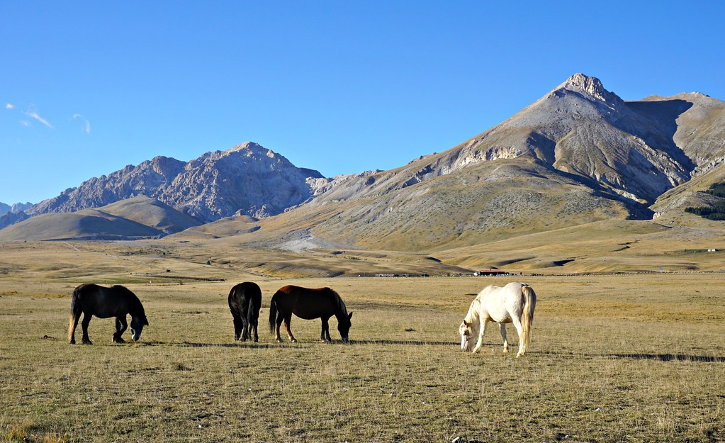 Puolivillejä hevosia Abruzzon arolla