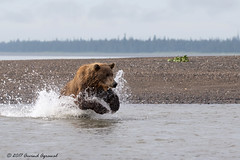 Salmon hunt - IMG_2391-1