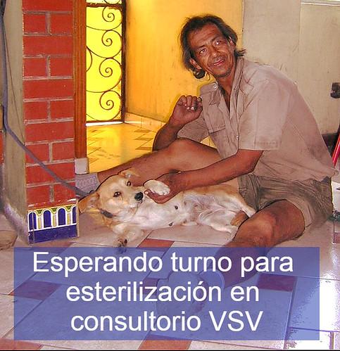 Echandía llevando a esterilizar a animales de su zona y de los cementerios de Barrios Altos.