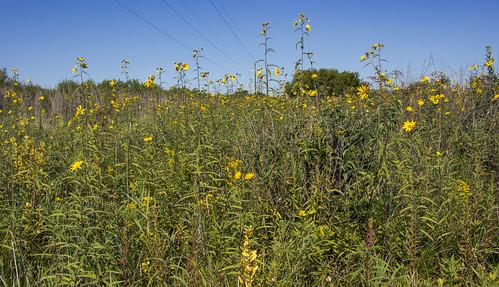 Kessler Railroad Prairie State Natural Area