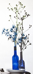 Blue bottle vase and shadow
