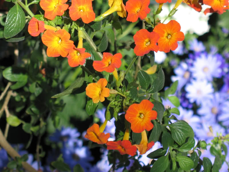 Flower12.jpg-original