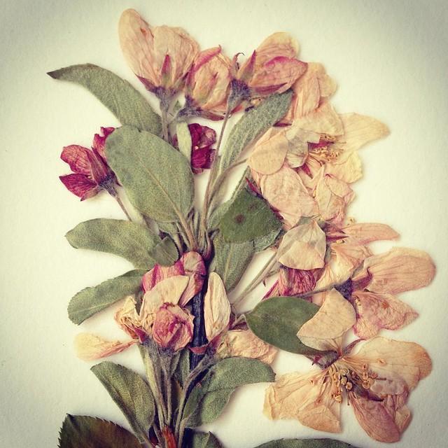 2017 Herbarium