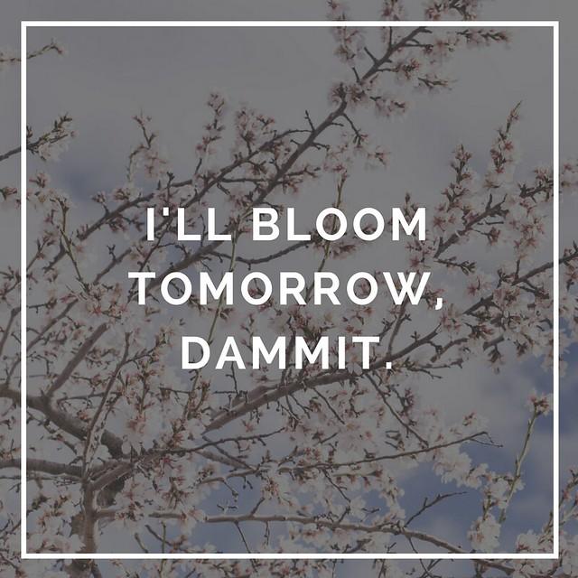 I'll Bloom tomorrow, dammit.