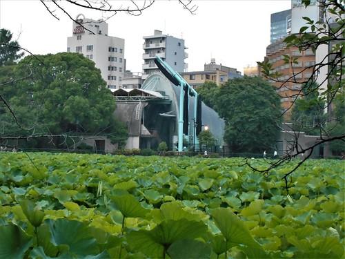 jp-tokyo 28-Ueno-Shinobazu (10)