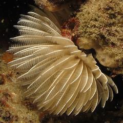 Polychaete worm I presume at Ponta do Ouro, Mozambique