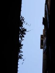 alley foliage tumble