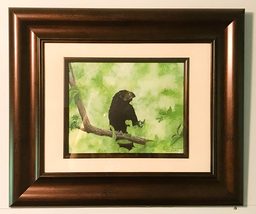 Groove-billed Ani painting