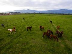 Recibimiento de caballos II
