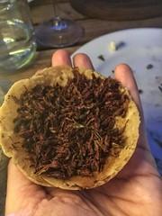 Casa Oaxaca El Restaurant chipalins (grasshoppers)