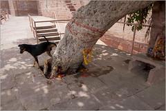 dogs r us!, jodhpur