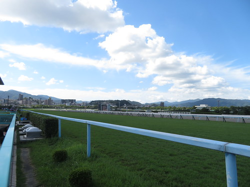 小倉競馬場の直線