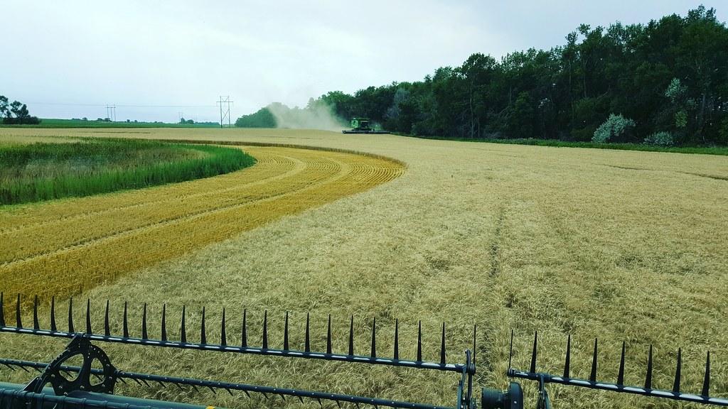 Schemper 2017 - North Dakota Wheat Harvest