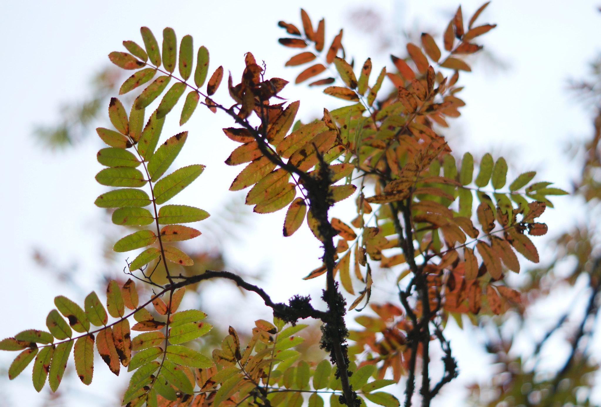 autumn colours 6