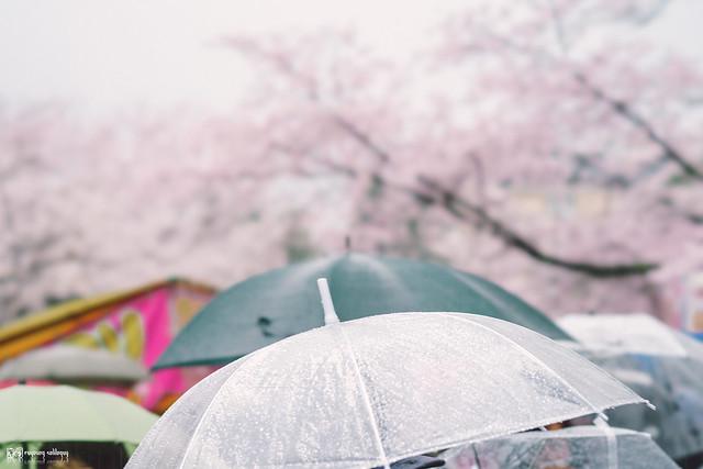 十年,京都四季 | 卷五 | 京都與我,有時還有關西 | 02