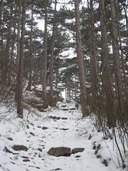 IMG_8511 Übers Wasserreservoir zurück zum Weg zur Ruine Rauheneck, 24.1.2010
