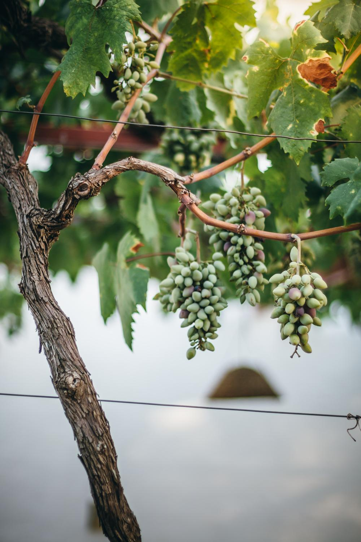 Lab Noon in Puglia | Saghar Setareh-95