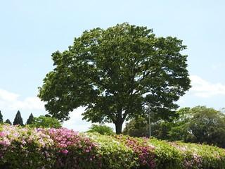 昭和の森 2 木々 02