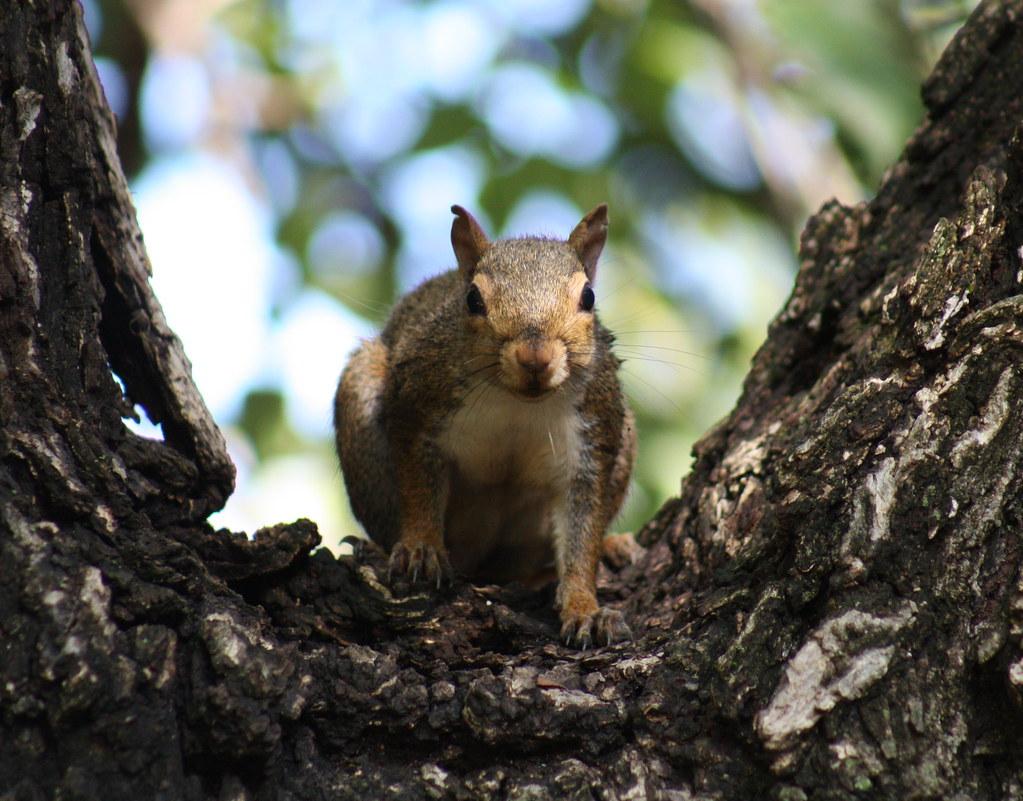 Squirrel Invasion 5