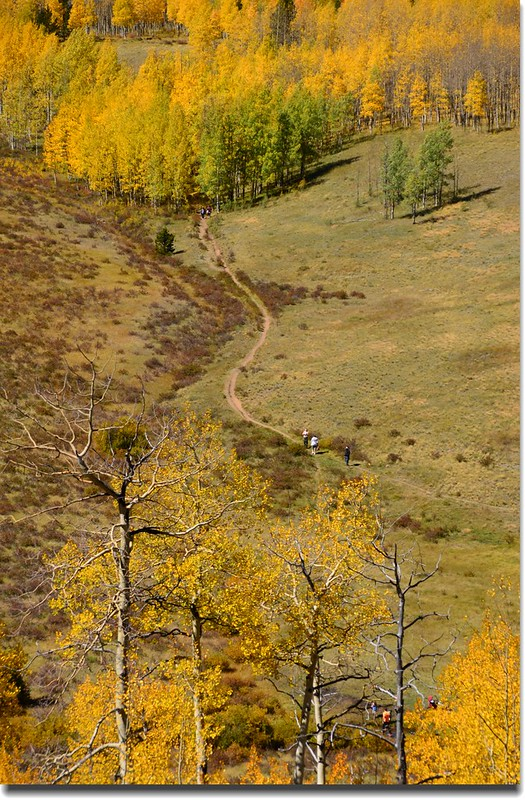 Fall colors, Kenosha Pass  (16)
