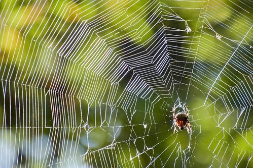 Spider in the Sun