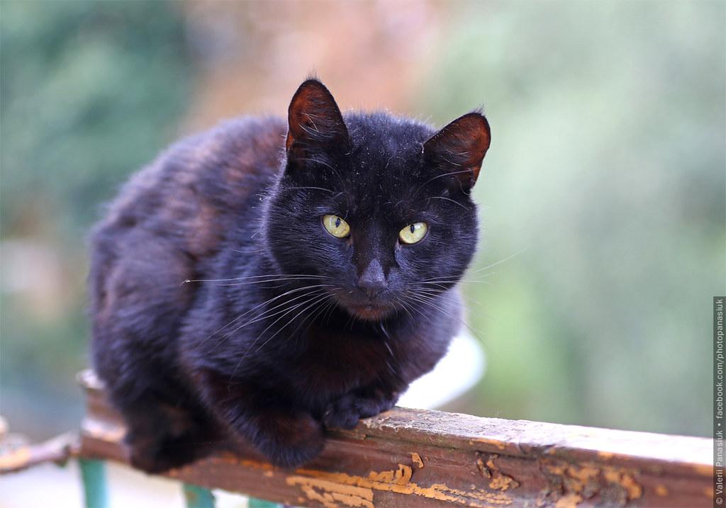 20170820_volodymyr_cat_001