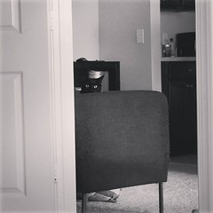 """Her attempt to """"hide"""" and watch me while I work. #scullytheblackcat"""