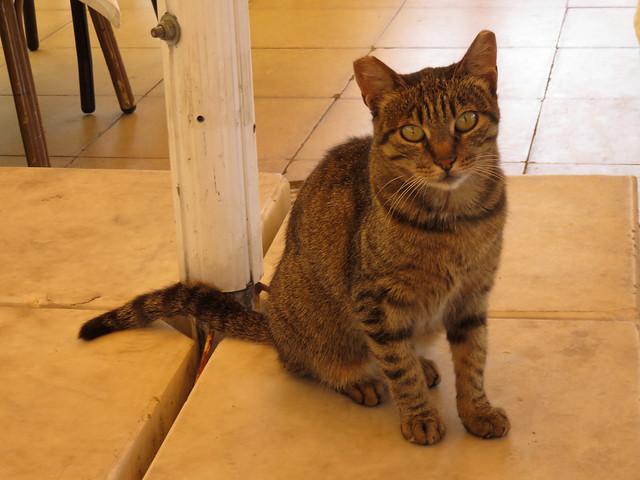 Restaurant Cat, Canon POWERSHOT SX700 HS