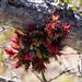 Epiphyte B306905focPr por jvpowell