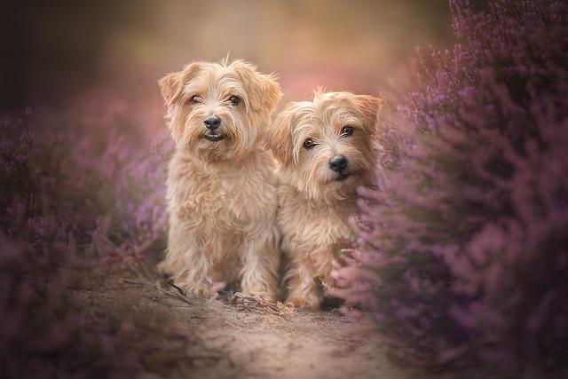 Dog Photography Worshop в Суррее, Великобритания 19-20 августа 2018 года