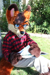 Pocket Fox