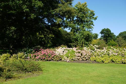 Summer in The Savill Garden
