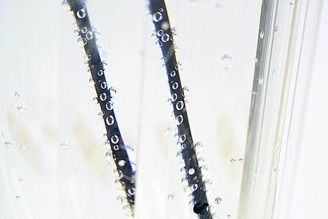 Lemonade bubbles and summer, Sony ILCE-7RM2, Sony FE 90mm F2.8 Macro G OSS