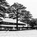 Shinto Hall, Yasukuni