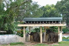 Bukittinggi - Elephant Housing