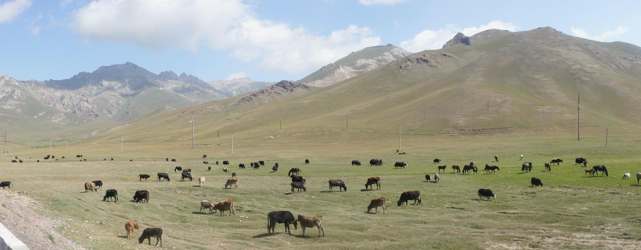 M41 our la Pamir