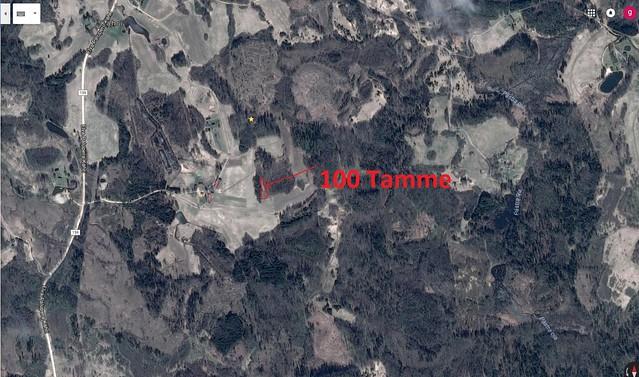 Tammeniidu tammesalu